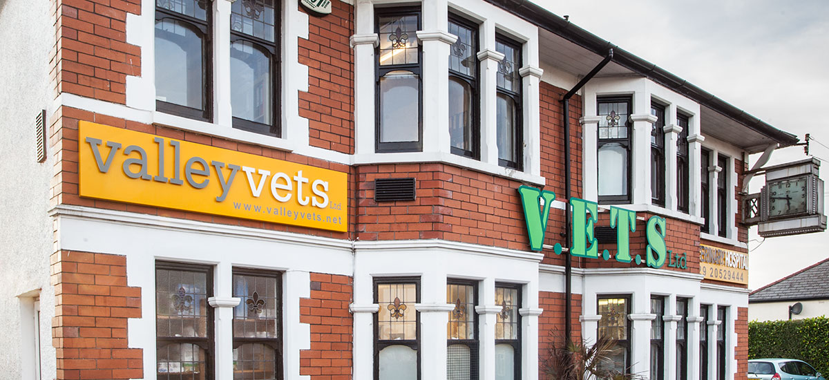 Valley Vets in Cardiff - Our Veterinary hospital in Cardiff provides friendly, professional and efficient care for the cats, dogs, rabbits and other small pets in and around Cardiff and South Wales