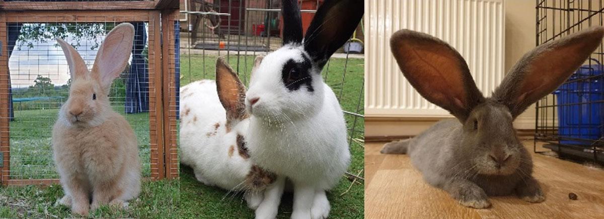Basic Rabbit Care