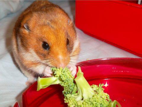 Hamster Tales...