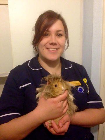 Animal Nursing Assistant