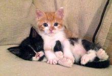 Kitten Open Day