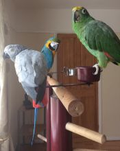 Birds at home recovering well
